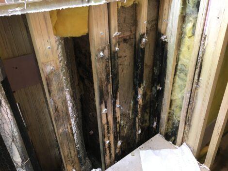 漏水時のカビ